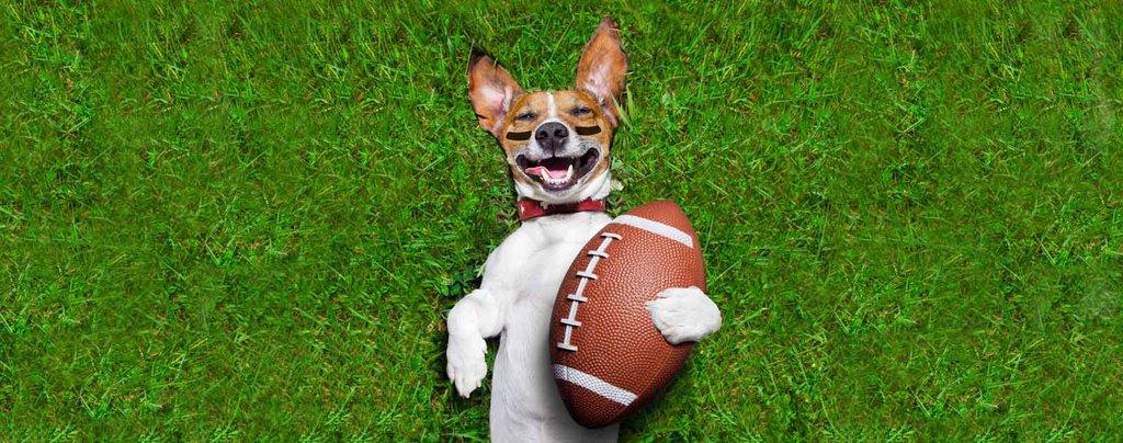 31092-00-rfr_football_dog_1600px_1024x1024